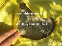 Bông khoáng Rockwool cuộn có lưới kẽm